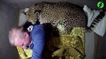 Cet homme dort avec son guépard apprivoisé... Gros chat