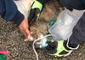 St. Louis Firefighters Use Oxygen Mask to Resuscitate Cat