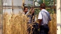 Klimawandel gefährdet Ernteerträge | Projekt Zukunft