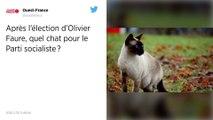 Après l'élection d'Olivier Faure, quel chat pour le Parti socialiste ?