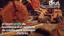 L'exploitation illégale de bois précieux menace la forêt amazonienne