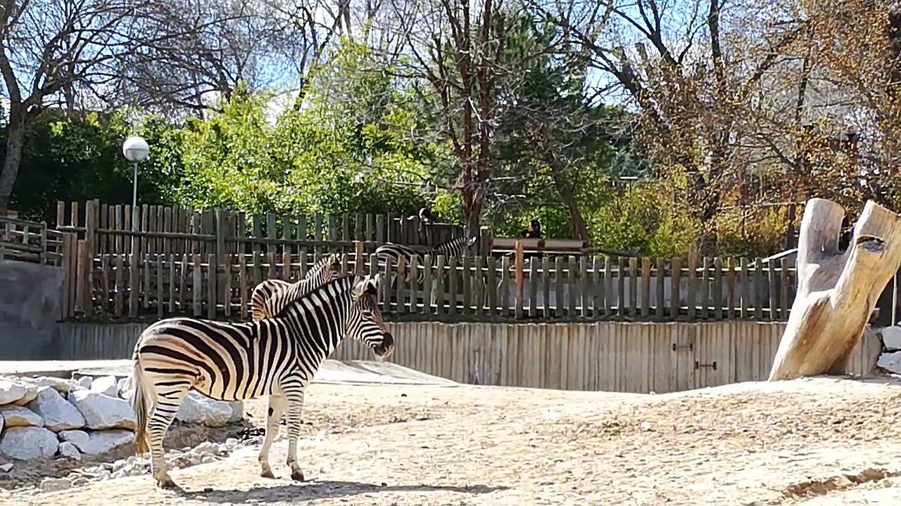 Zoo, cap 2, El Avestruz come mier.. y amigos / the crap eater ostrich and friends