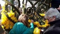 Le première mini-fête des jonquilles à Waremme en Belgique