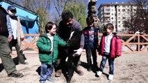 Evcil Hayvanlar Parkı'nın yeni üyeleri - ANKARA