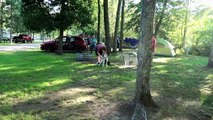 CAMPING WITH SEVEN DOGS | Five Huskies and Two Honorary Huskies Day 1 & 2