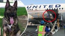 Hewan dalam pesawat: United Airlines keliru kirim anjing ke Jepang - TomoNews