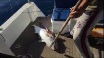 Harika balık avı - Volkan Uygur - ALANYA | Kalkan kardeşler jigging videoları