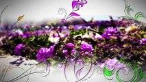 A FLEUR DE VILLE : A Fleur de Ville à Saint-Rémy-de-Provence