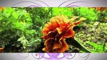 A FLEUR DE VILLE : A Fleur de Ville à Pélissanne