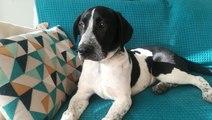 """""""Adopte un chien"""" avec Corse-Matin : découvrez Nougat à Ajaccio"""