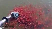 Mais que font ces petits poissons à ce gros poisson??? Impressionnant
