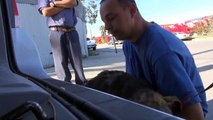 Homeless Dog rescued - Must see