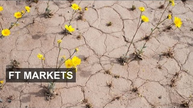 Value or growth?   FT Markets