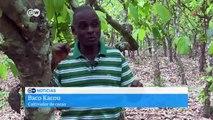 Plaga de orugas en Costa de Marfil