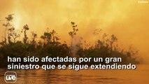 Un desastre ambiental de gran magnitud: la reserva Indio Maíz, uno de los pulmones de Nicaragua, es arrasada por el incendio más grande jamás reportado en esa z