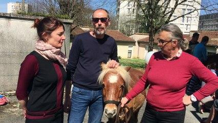Les poneys au Foyer Soleil de Soyaux