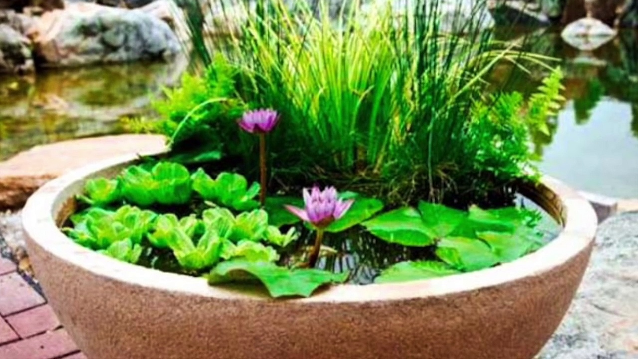 Make your very own Pond in a Pot! – Backyard Pond!