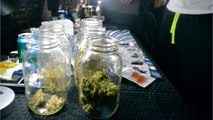 Pharmaceutical Giants Research Cannabis Drugs Despite Federal Restrictions