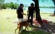 Dog Whisperer S08E05 Homeboys and Hounds