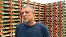 Sandıklı domatesi büyükşehirlerden talep görüyor - AFYONKARAHİSAR