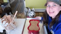 How to Make a Dog Birthday Cake | Birthday Cake For Dogs | DIY Dog Treats Recipe 98