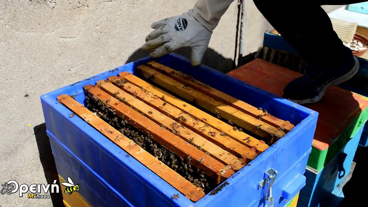 Πως θα παράγουμε πολύ μέλι, απο λίγα μελίσσια!!!