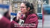 VIDEO - Ces militants ont donné de la voix afin de demander l'interdiction des animaux dans les cirques