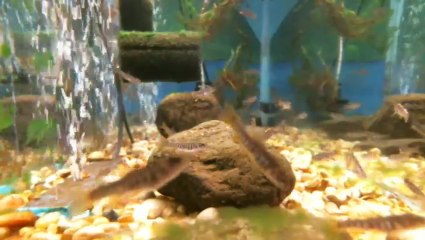EPCAMR's Brook Trout Tank 4/10/18 Snapshot