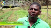 Agriculture biologique en Guadeloupe
