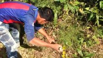 Amazing Catch Wild Rabbit By Digging Hole in Cambodia - How To Find A Rabbits Hole in My Village