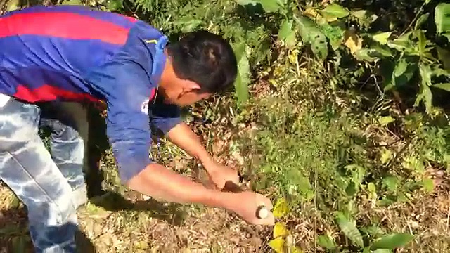 Amazing Catch Wild Rabbit By Digging Hole in Cambodia – How To Find A Rabbits Hole in My Village