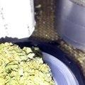 Mariguana Head Shop| Buy Marijuana Online| Buy Cannabis Oil Online| Buy Marijuana Seeds Online|Buy Weed Online