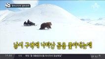 """""""쫓아 오지 마"""" 곰의 반격"""