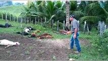 Animais mortos em Ecoporanga