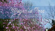 Amazing Scenes of Nature in Nature Relaxation Footage in 4k - FLOWERS - 12