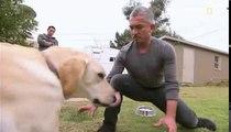 Dog Whisperer S09E12 Cesar's Worst Bite