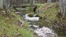 sonidos de la naturaleza / rios , pajarillos,paisajes /musica relajante/nature sounds.