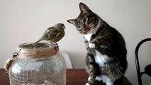 Ce chat adorable fait un petit calin à un oiseau