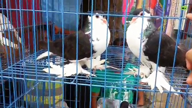 Pigeons Price – in Bird Market || Part – 2||
