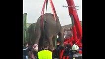 İspanya'da kaza yapan araçtaki filler otoyolu kapattı