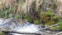 sonidos de agua rios y arroyos /sounds of rivers streams/nature sounds/