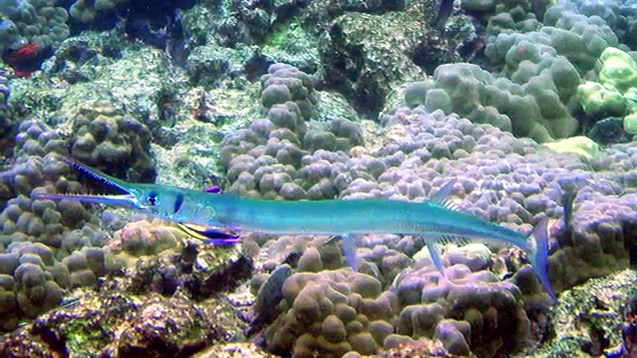 rarest unusual sea creatures