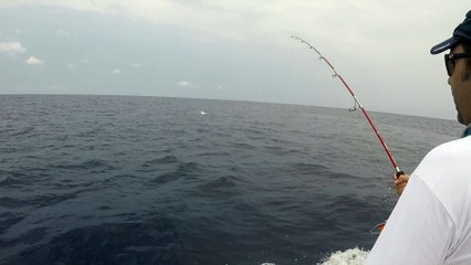 Sailfish Jump and Fight