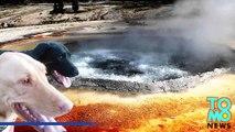 Hombre sufre graves quemaduras al intentar salvar sus perros que saltaron en pozo de aguas termales
