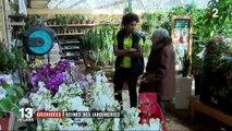 Éco/Conso : y a-t-il un juste prix pour les orchidées ?