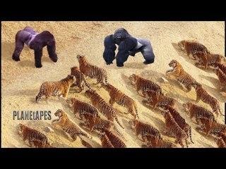 Real Fight Monkey vs Leopard, Lion, Buffalo vs Lion