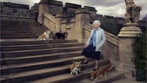Queen Elizabeth's Last Corgi Willow Dies at Age 14