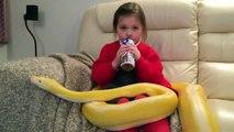 Cette fillette regarde la TV avec un serpent géant sur les genoux