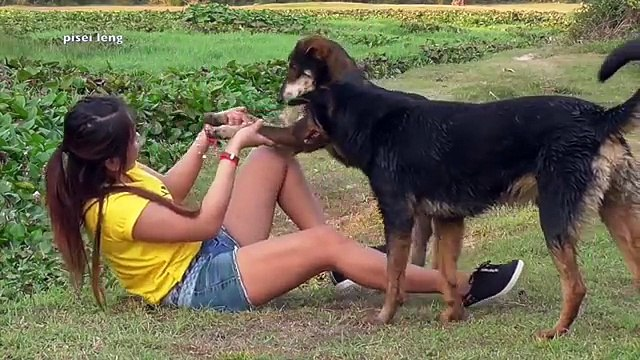 Funny dog and girl playing at home | Amazing girl playing with groups of baby cute dog par