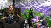 CANNABIS Y CENSURA_ Youtube cancela CANALES de INFORMACIÓN CANNÁBICA. III Castelló Cannabis Cup  Marihuana NOW 45
